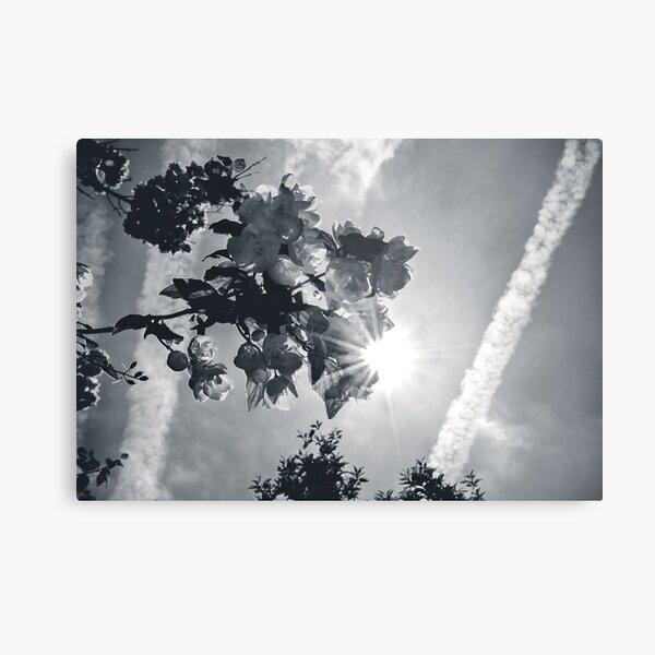 Sunhine Metal Print