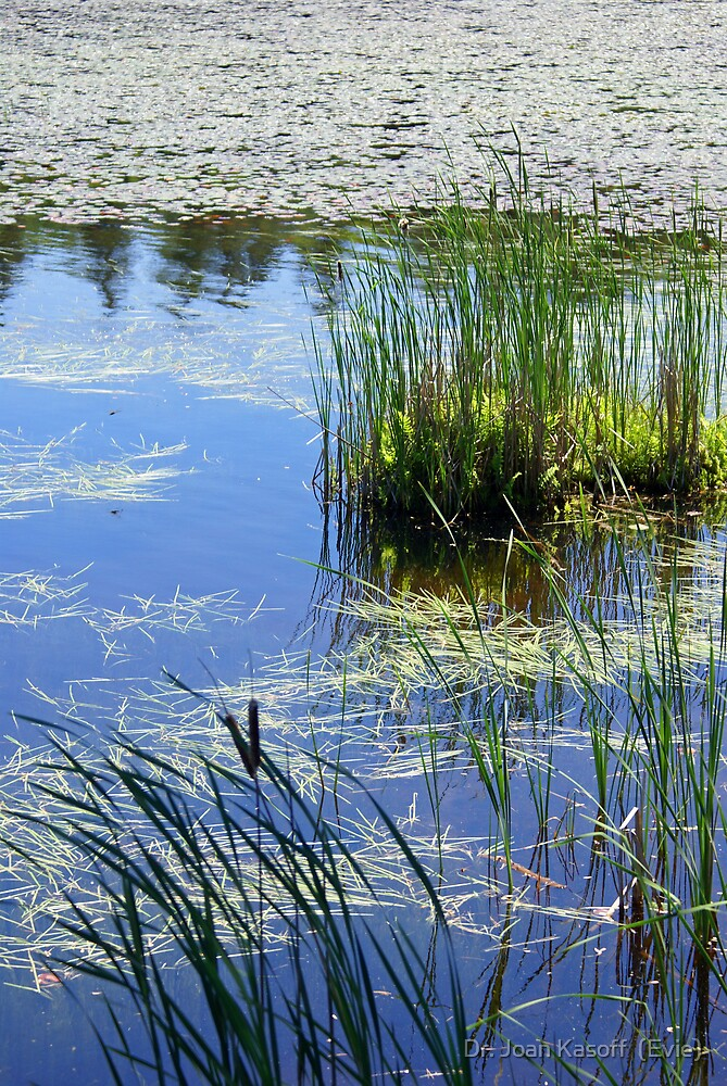 Cattails and Lily Pads by Dr. Joan Kasoff  (Evie)