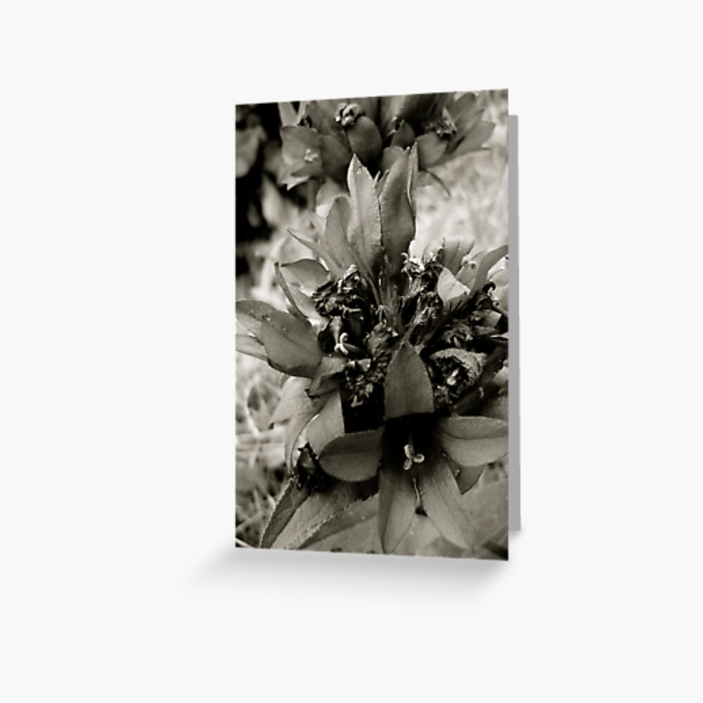 Beauty in Greyscale Greeting Card