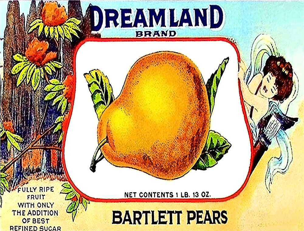 Big yellow pear, fruit vintage label with little angel and flowers by AmorOmniaVincit