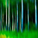 wild stripes by Dorit Fuhg