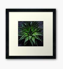 Succulent. Haworthia fasciata Framed Print