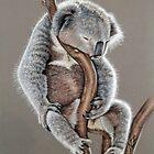 Koala Sleep by Nicole Zeug
