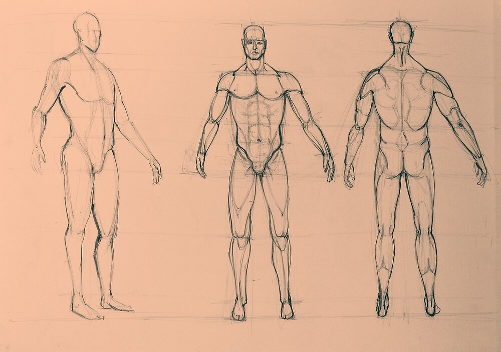 Anatomy sketch of male body\