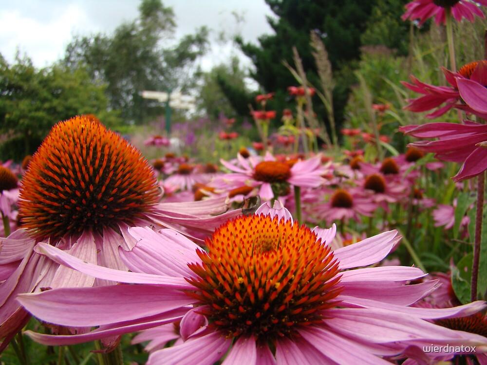 Flower Garden by wierdnatox