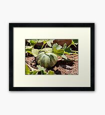 A small green decorative pumpkin with leaves on the ground Framed Print