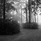 Rainy Sunday I by Jessie Harris