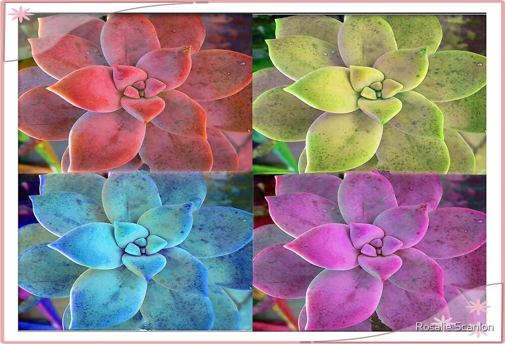 Aloe in Make Believe Colors by Rosalie Scanlon