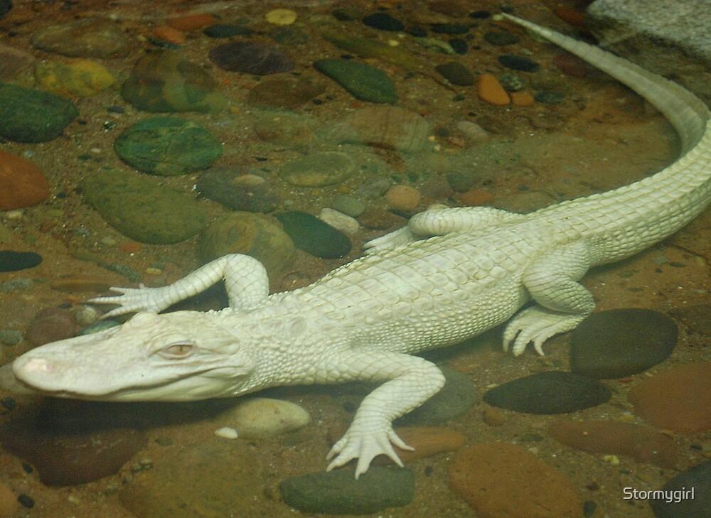 White Alligator by Stormygirl