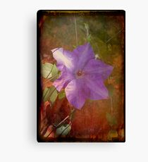 Purple Clematis #2 Canvas Print