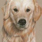 Golden Retriever Portrait by Nicole Zeug