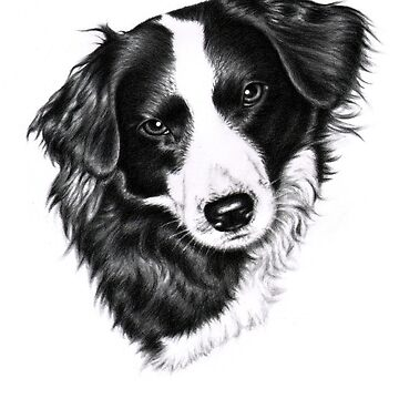 Border Collie Female by ArtsandDogs