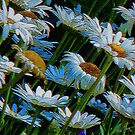 Blue Daisies by WildThingPhotos