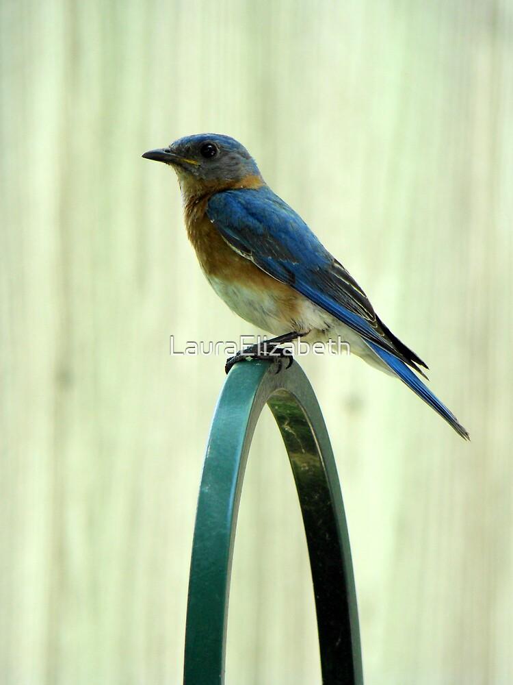 Blue Bird by LauraElizabeth