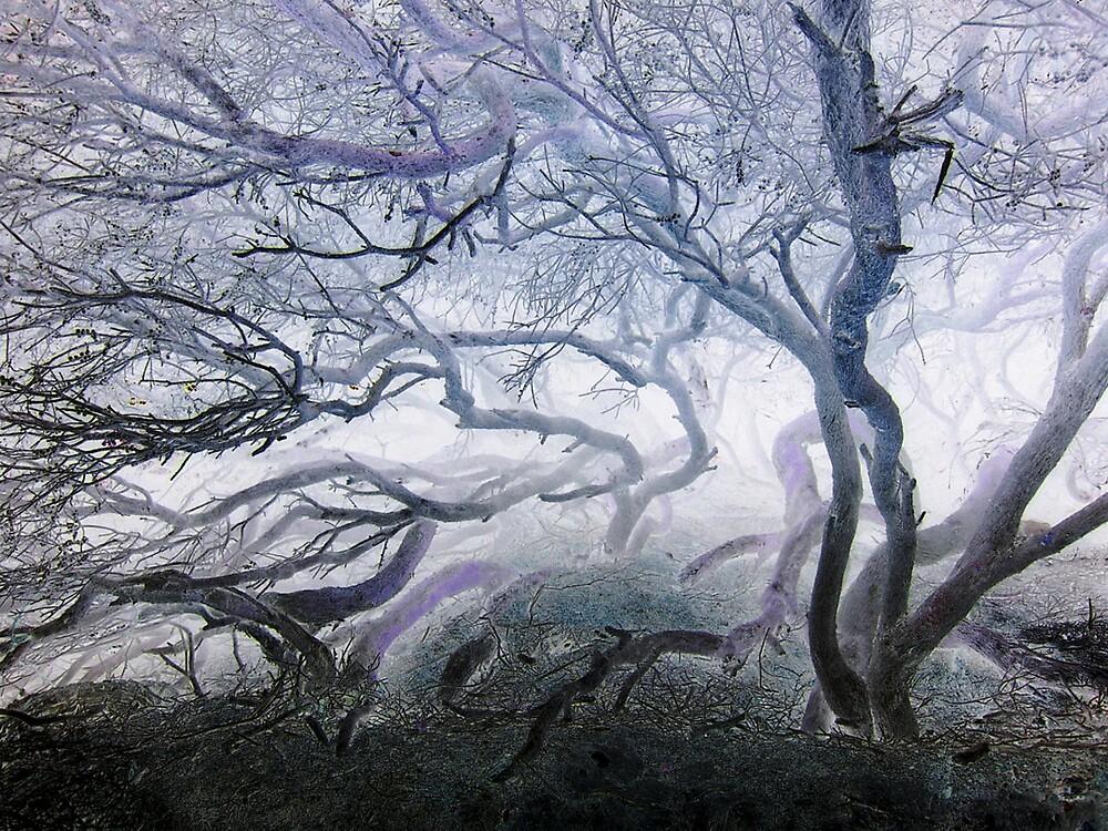 Misty Tree by hebedezign