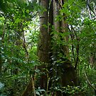 Jungle Tree by michelle123