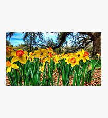 The Flower Forest Photographic Print