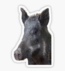 Wild Boar Vector Sticker