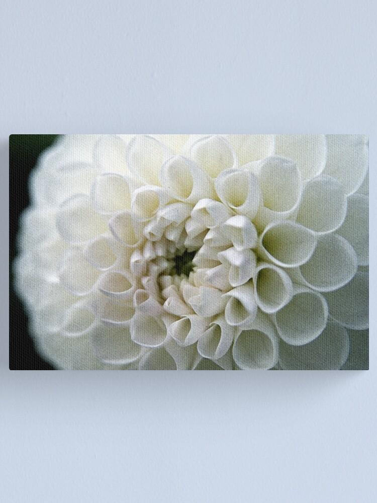Alternate view of Dahlia in white Canvas Print