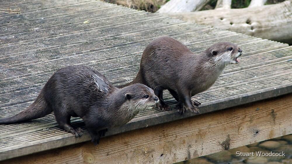 Asian Otters by Stuart Woodcock