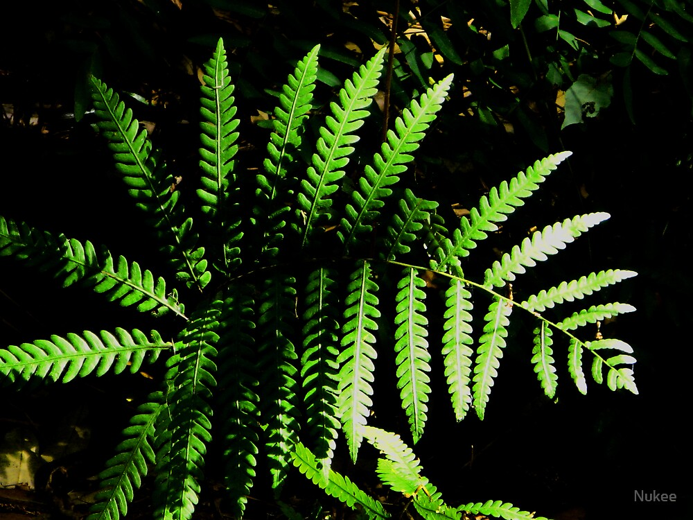 A Fern Grows.... by Nukee