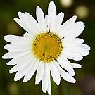 NDVH Flower 1 by nikhorne