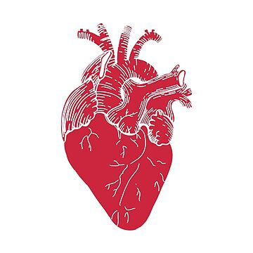 Anatomical red heart by librebird