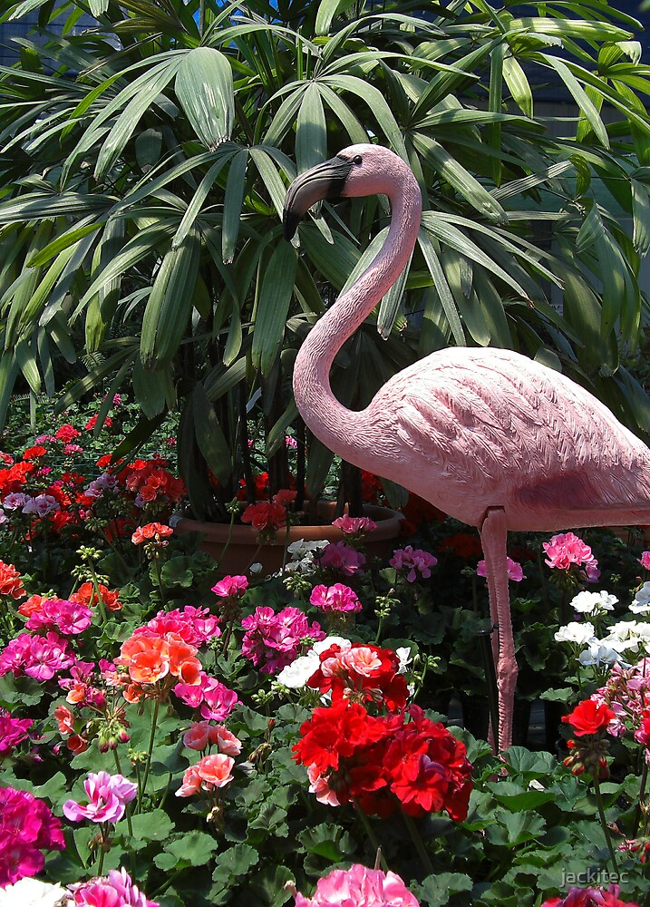 Flamingo by jackitec