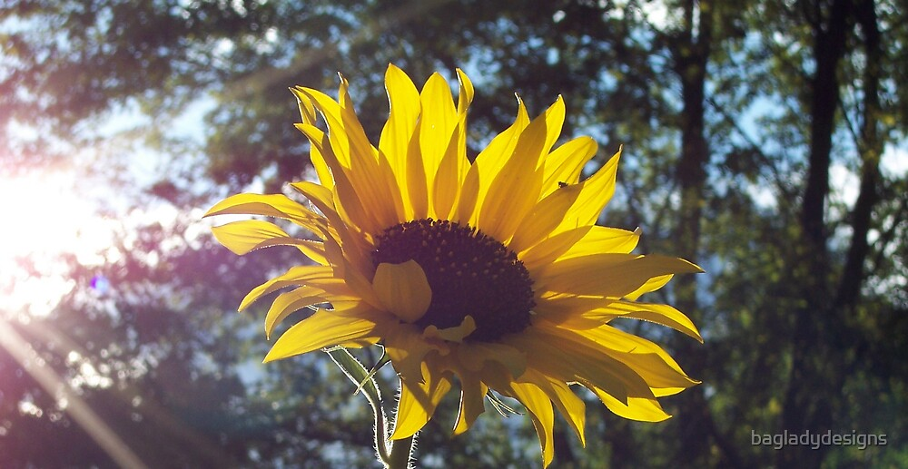 SUN TOUCHED SUNFLOWER by bagladydesigns