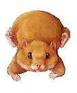 Hamsters by Lacey  Ewald