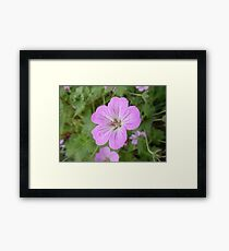 nature up close and personal Framed Print