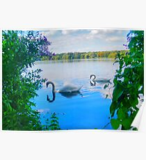 Swans on a Lake Poster