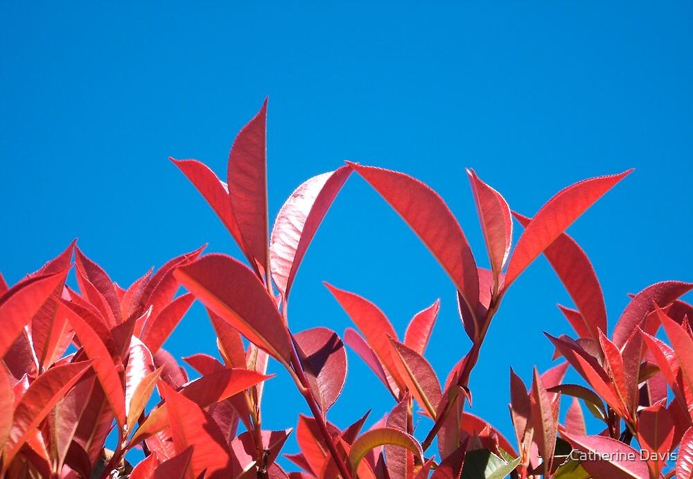 Red by Catherine Davis