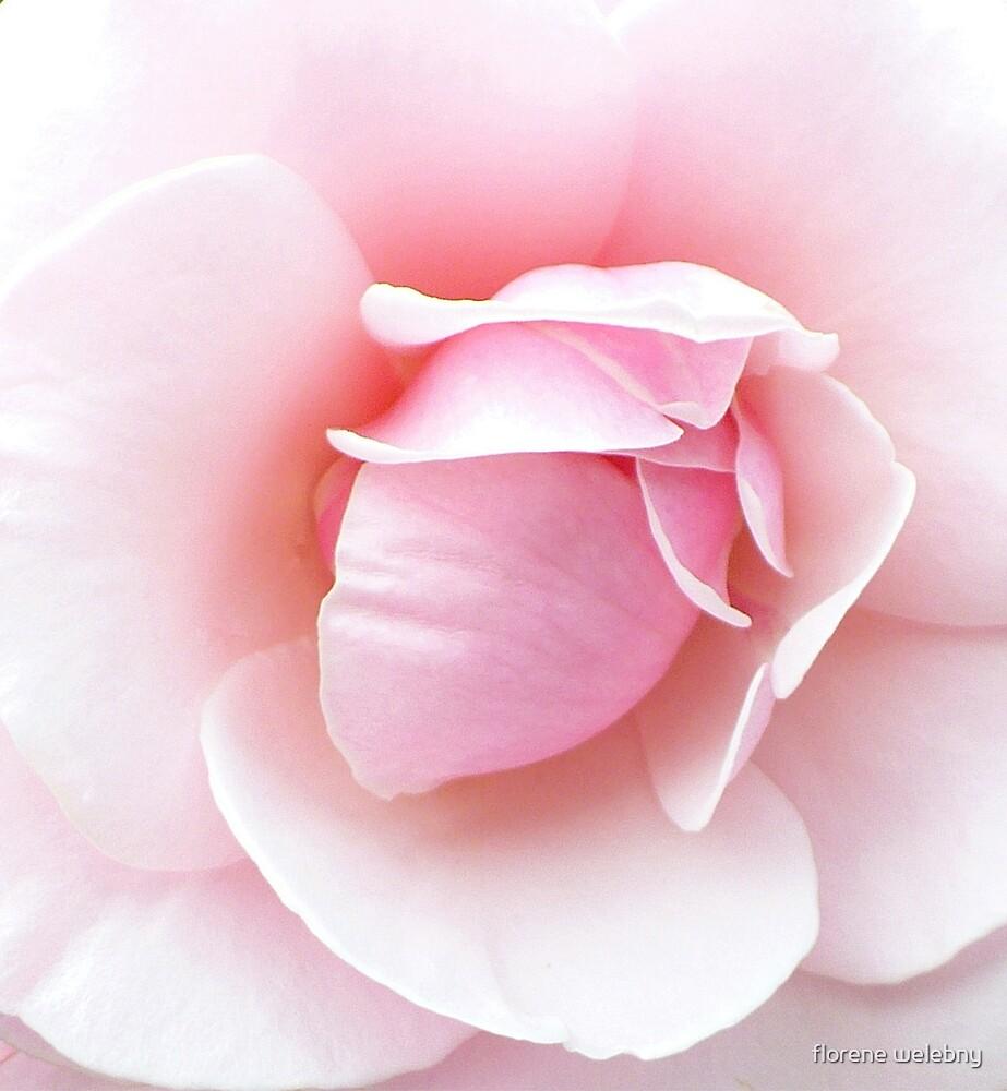 Powder Puff Rose by florene welebny