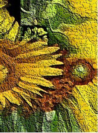 edge of sunflower by fuatnoor