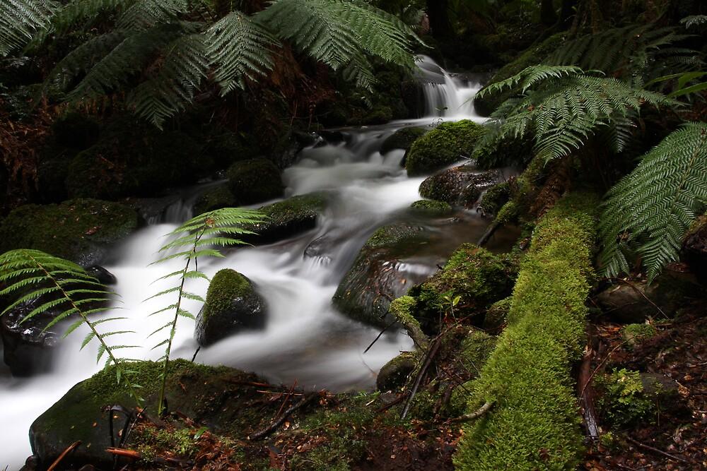 White Creek by Lindsay Knowles