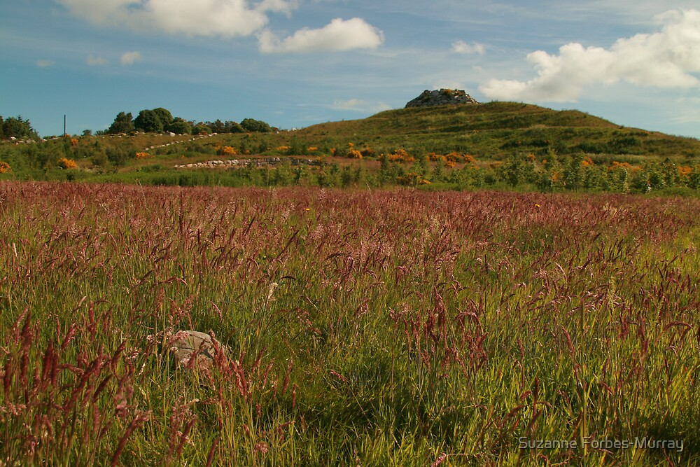 Red Grasses by Suzanne Forbes-Murray