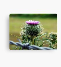 Magical Ireland - Early Morning Thistle Canvas Print