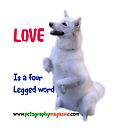 LOVE is a four legged word. by Ian McKenzie