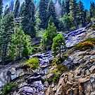 Emerald Bay - just above the view by John Heywood