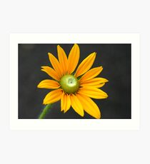 Beauty Of Orange Art Print