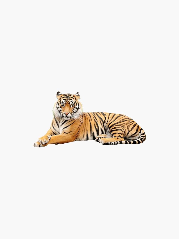 Tigre de rooroor