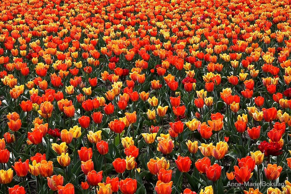 Tulips everywhere.... by Anne-Marie Bokslag