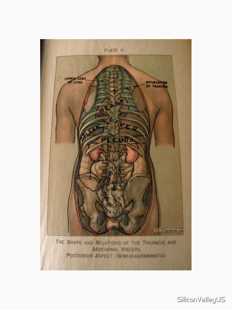 Antike Anatomie Buch Zeichnung von SiliconValleyUS