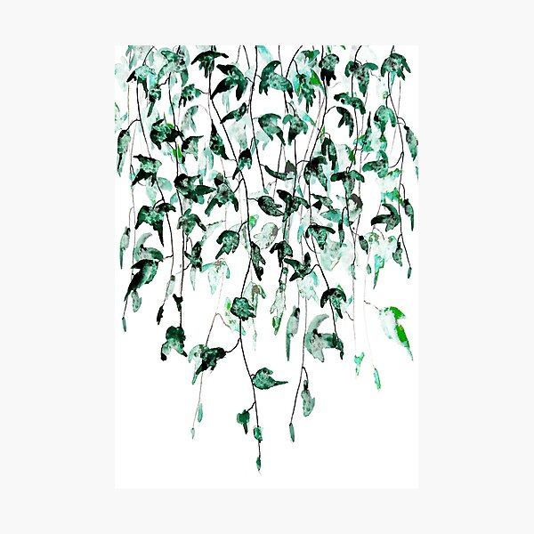 Ivy on the wall watercolor Photographic Print