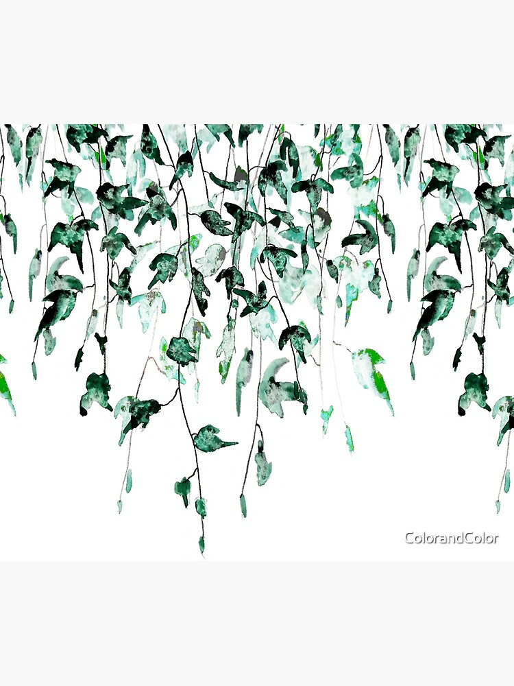 Ivy on the wall watercolor by ColorandColor