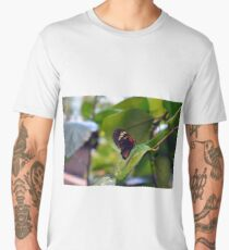 Small black and red butterfly in the garden  Men's Premium T-Shirt