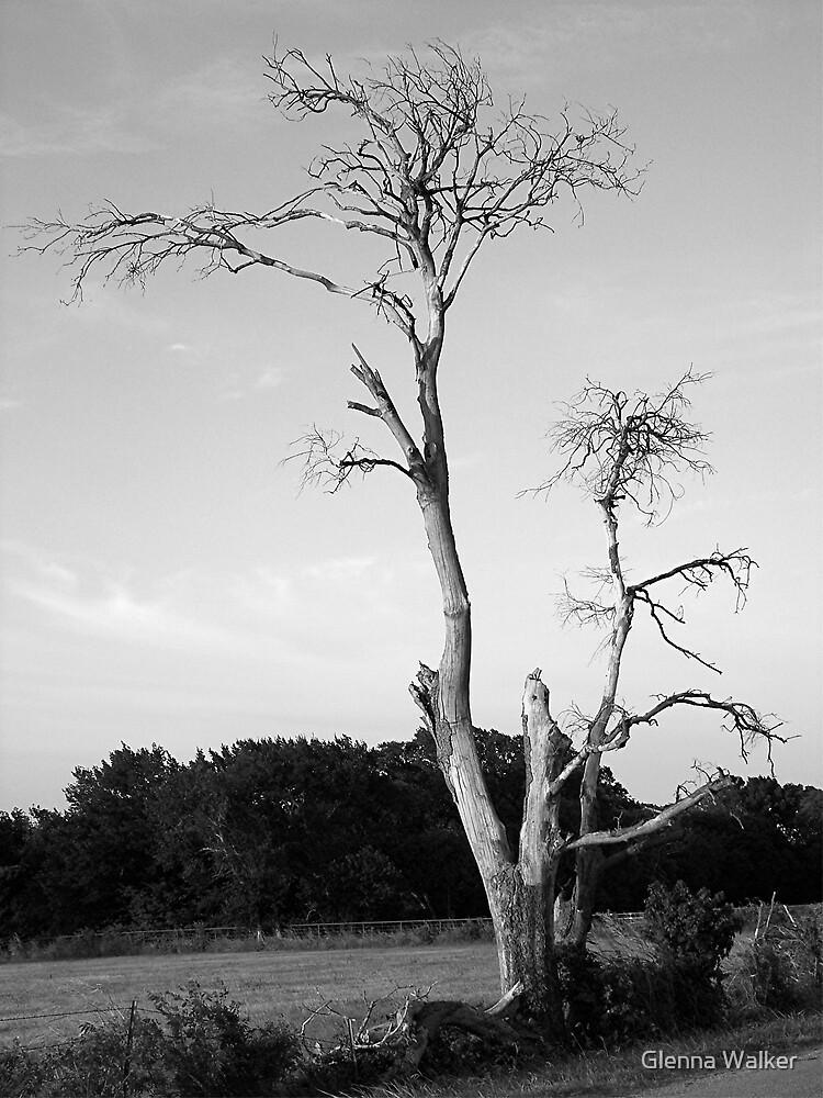 Reach For The Sky by Glenna Walker