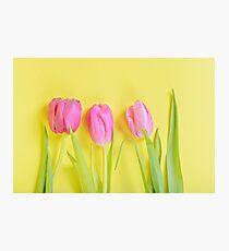 Three pink tulips on yellow Photographic Print
