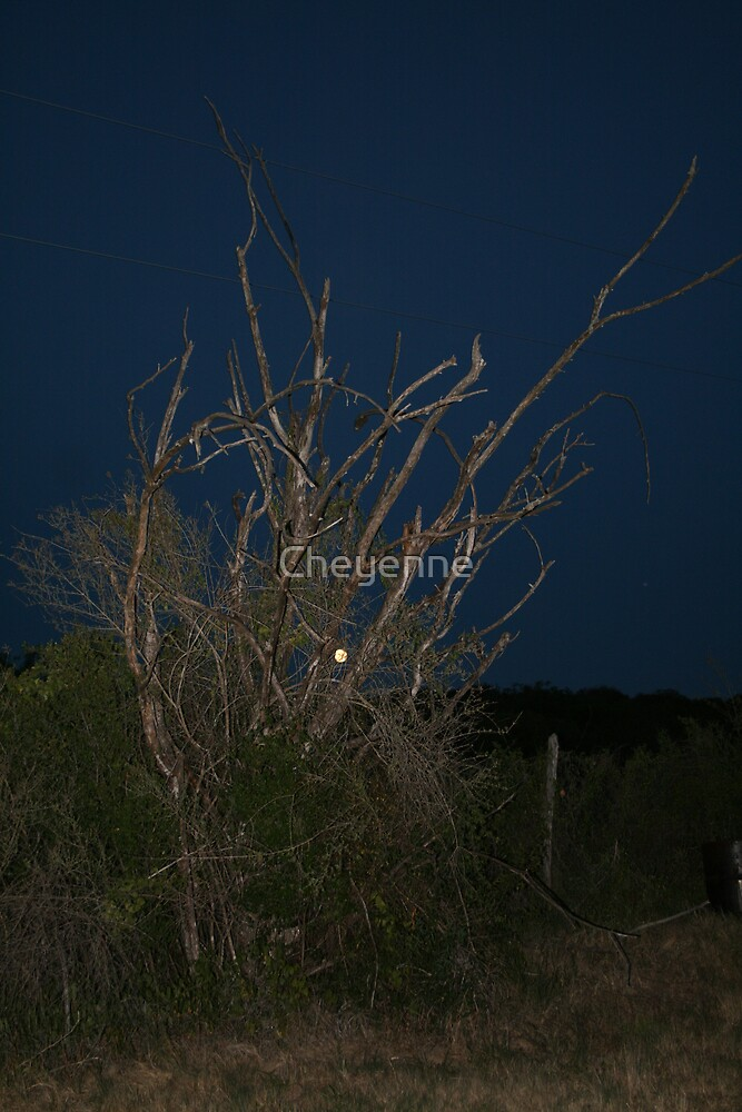 A Bewitching Night... by Cheyenne